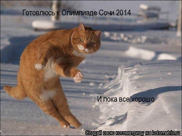 Котоматрица: Готовлюсь к Олимпиаде Сочи 2014 И пока все хорошо