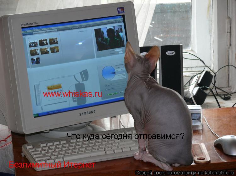Котоматрица: Что куда сегодня отправимся? Безлимитный Итернет www.whiskas.ru