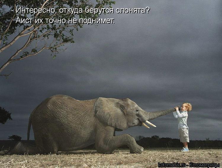 Котоматрица: - Интересно, откуда берутся слонята? Аист их точно не поднимет.