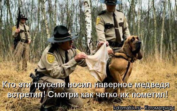 Котоматрица: Кто эти труселя носил наверное медведя встретил! Смотри как четко их пометил!