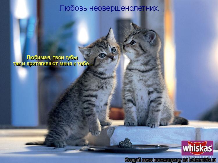 Котоматрица: Любовь неовершенолетних... Любимая, твои губы так и притягивают меня к тебе...