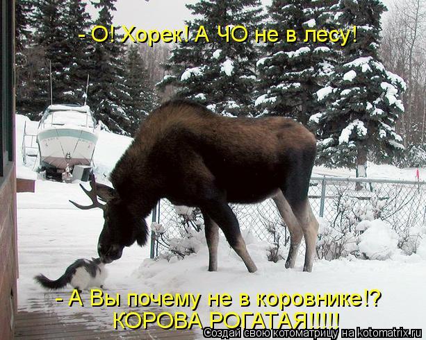 Котоматрица: - О! Хорек! А ЧО не в лесу! - А Вы почему не в коровнике!? КОРОВА РОГАТАЯ!!!!!