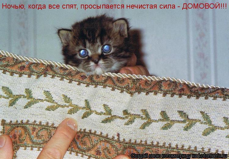 Котоматрица: Ночью, когда все спят, просыпается нечистая сила - ДОМОВОЙ!!!