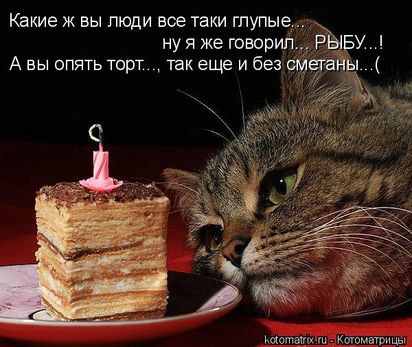 Котоматрица: Какие ж вы люди все таки глупые... ну я же говорил... РЫБУ...! А вы опять торт..., так еще и без сметаны...(