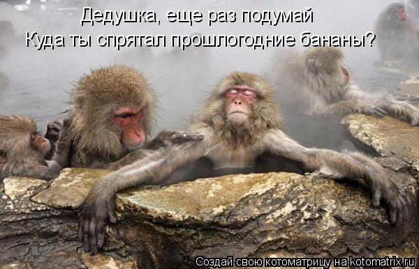 Котоматрица: Дедушка, еще раз подумай  Куда ты спрятал прошлогодние бананы?