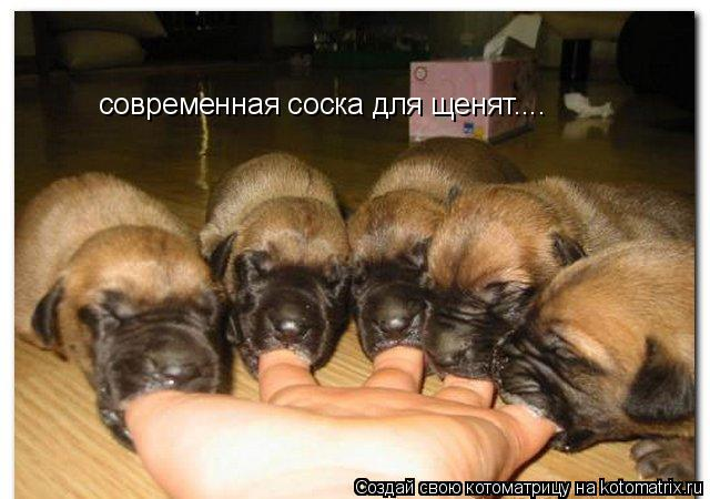 Котоматрица: современная соска для щенят....