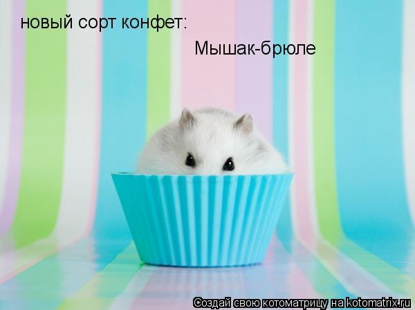 Котоматрица: новый сорт конфет: Мышак-брюле
