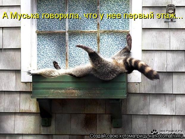 Котоматрица: А Муська говорила, что у нее первый этаж...