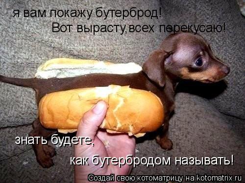 Котоматрица: я вам покажу бутерброд! Вот вырасту,всех перекусаю! знать будете, как бутербродом называть!
