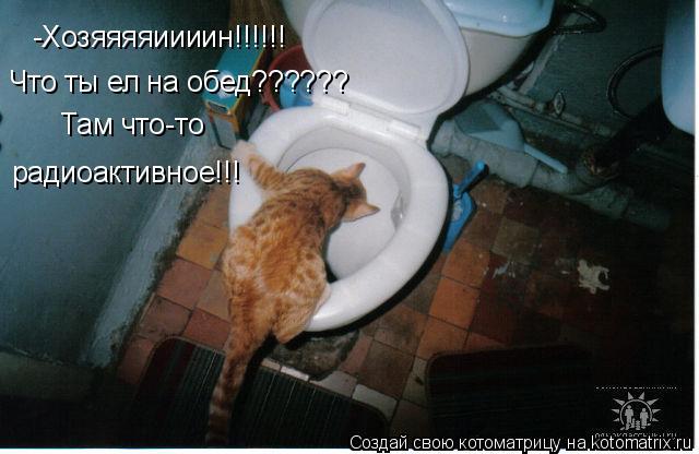Котоматрица: -Хозяяяяиииин!!!!!!  Что ты ел на обед??????   Там что-то  радиоактивное!!!