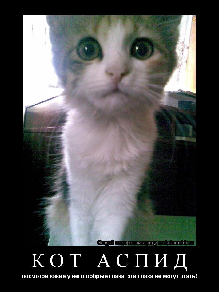 Котоматрица: Кот Аспид посмотри какие у него добрые глаза, эти глаза не могут лгать!