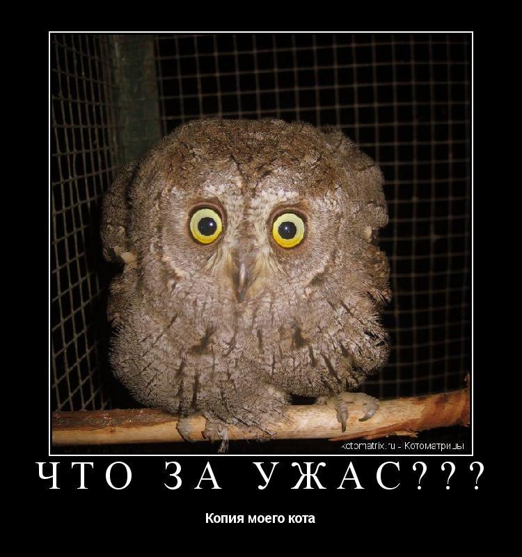 Котоматрица: Что за ужас??? Копия моего кота