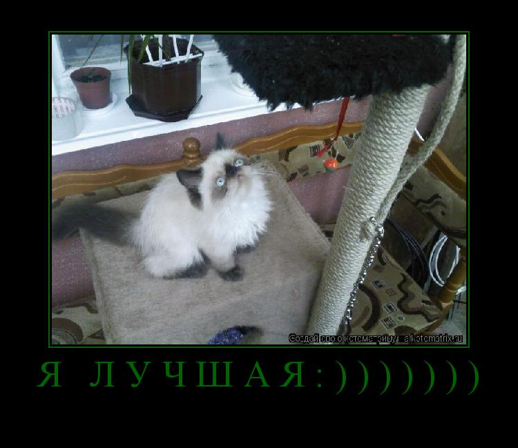 Котоматрица: Я лучшая:)))))))