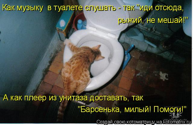 """Котоматрица: Как музыку  в туалете слушать - так """"иди отсюда, рыжий, не мешай!"""" А как плеер из унитаза доставать, так  """"Барсенька, милый! Помоги!"""""""