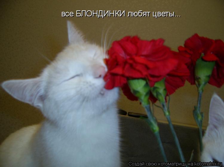 Котоматрица: все БЛОНДИНКИ любят цветы...