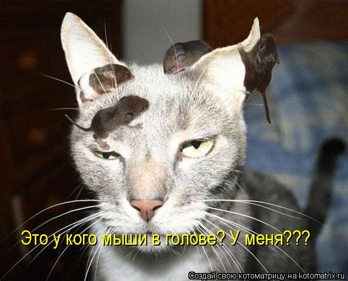 Котоматрица: Это у кого мыши в голове? У меня???