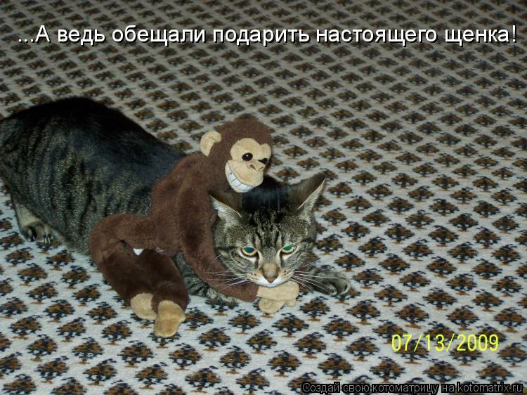 Котоматрица: ...А ведь обещали подарить настоящего щенка!
