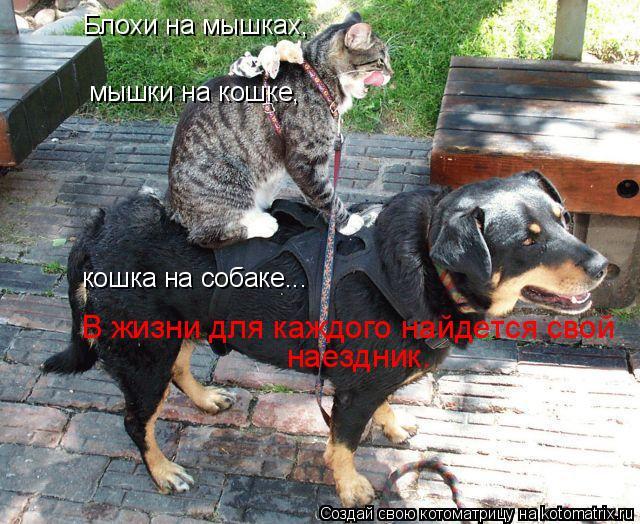 Котоматрица: мышки на кошке, кошка на собаке... Блохи на мышках, наездник. В жизни для каждого найдется свой