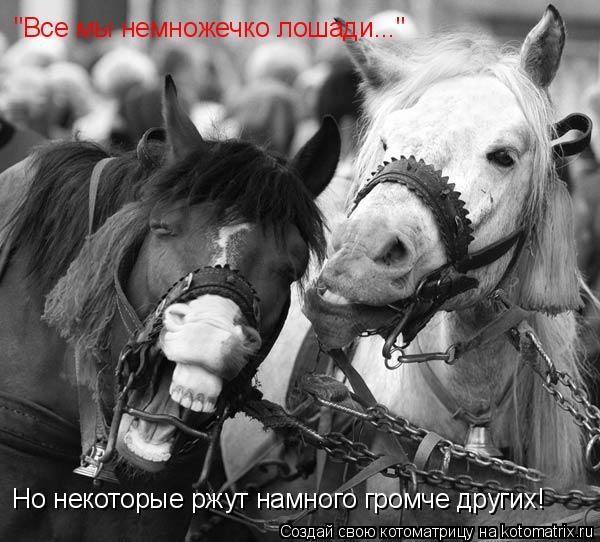 """Котоматрица: """"Все мы немножечко лошади..."""" Но некоторые ржут намного громче других!"""