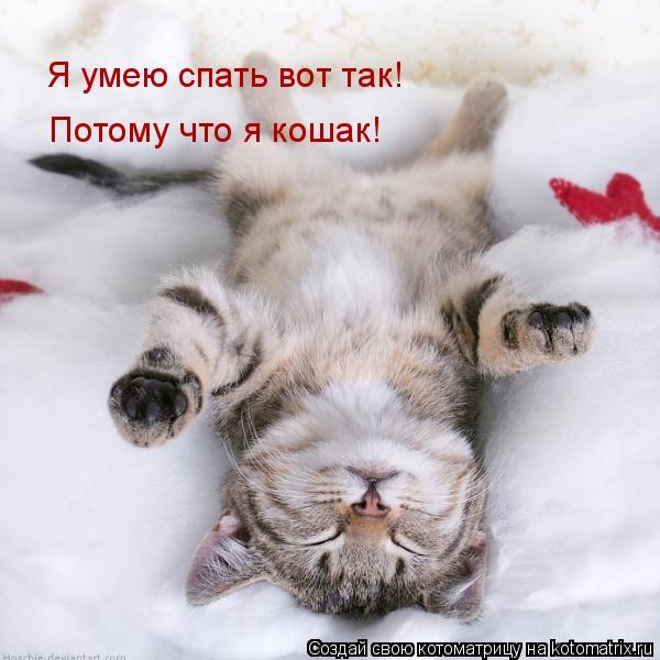 Котоматрица: Я умею спать вот так! Потому что я кошак!