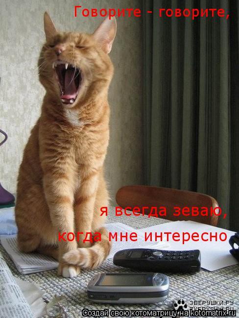 Котоматрица: Говорите - говорите, когда мне интересно я всегда зеваю,
