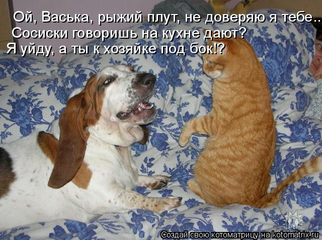 Котоматрица: Сосиски говоришь на кухне дают? Я уйду, а ты к хозяйке под бок!? Ой, Васька, рыжий плут, не доверяю я тебе...