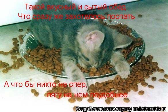 Котоматрица: Такой вкусный и сытый обед Что сразу же захотелось поспать А что бы никто не спер, лягу на нем поудобнее