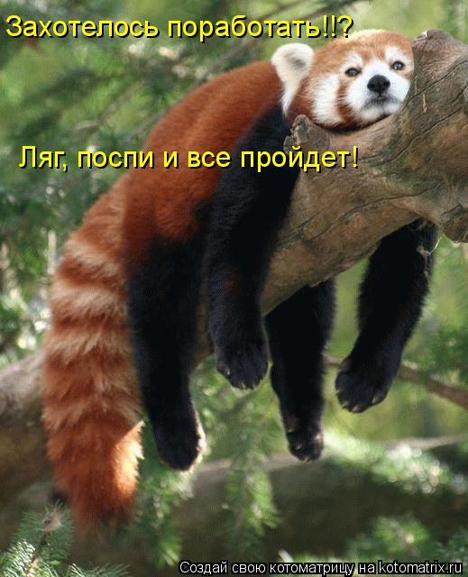 Котоматрица: Захотелось поработать!!? Ляг, поспи и все пройдет!