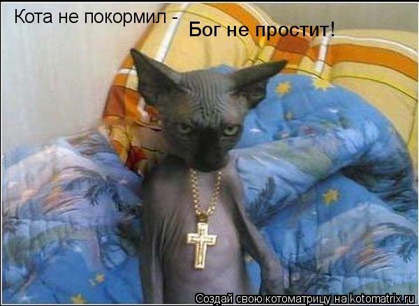Котоматрица: Кота не покормил -  Бог не простит!