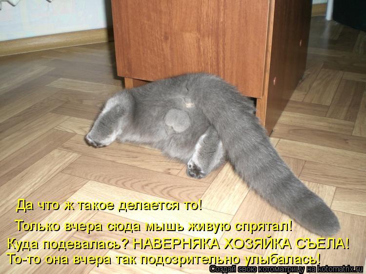 Котоматрица: Да что ж такое делается то!  Только вчера сюда мышь живую спрятал! Куда подевалась? НАВЕРНЯКА ХОЗЯЙКА СЪЕЛА! То-то она вчера так подозрительн