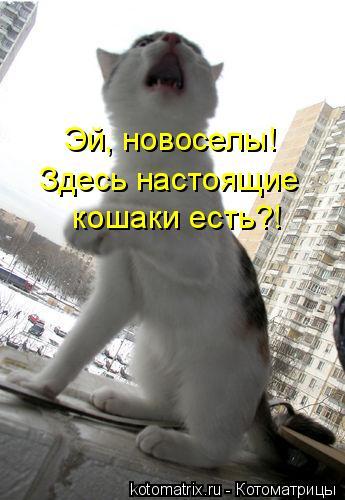 Котоматрица: Эй, новоселы! Здесь настоящие  кошаки есть?!