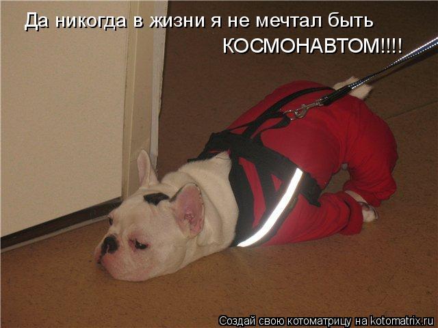 Котоматрица: Да никогда в жизни я не мечтал быть КОСМОНАВТОМ!!!!