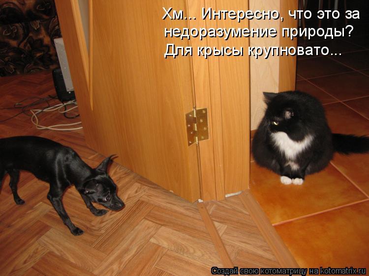 Котоматрица: Хм... Интересно, что это за  недоразумение природы? Для крысы крупновато...