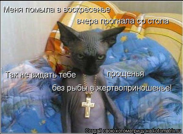 Котоматрица: Меня помыла в воскресенье вчера прогнала со стола Так не видать тебе   прощенья  без рыбы в жертвоприношенье!
