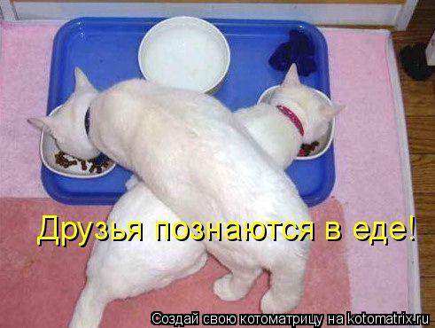 Котоматрица: Друзья познаются в еде!