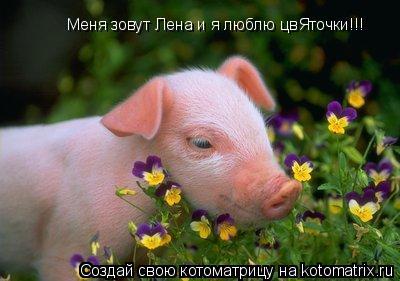 Котоматрица: Меня зовут Лена и я люблю цвЯточки!!!