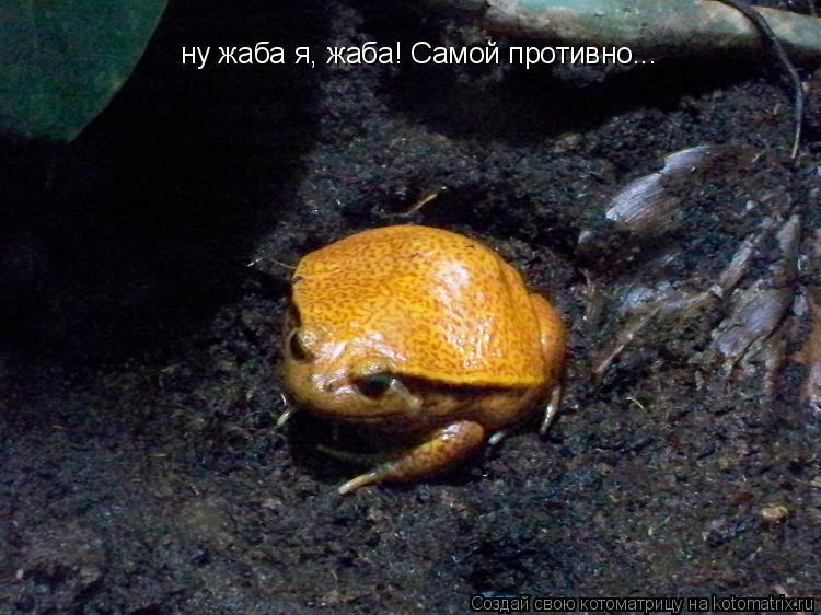 Котоматрица: ну жаба я, жаба! Самой противно...