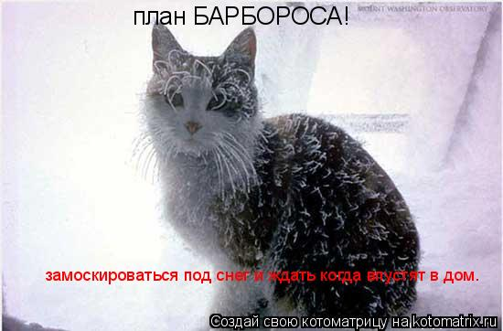 Котоматрица: план БАРБОРОСА! замоскироваться под снег и ждать когда впустят в дом.