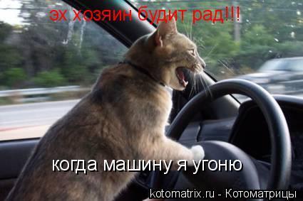 Котоматрица: эх хозяин будит рад!!! когда машину я угоню