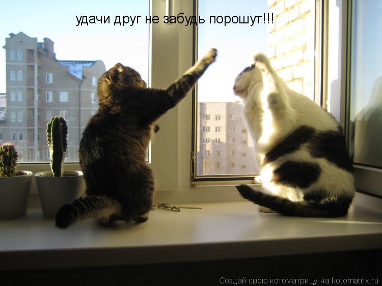 Котоматрица: удачи друг не забудь порошут!!!