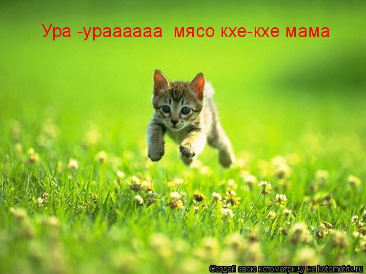Котоматрица: Ура -ураааааа  мясо кхе-кхе мама