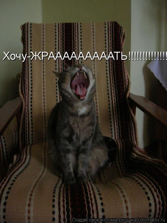 Котоматрица: Хочу-ЖРАААААААААТЬ!!!!!!!!!!!!!!!!!!!!