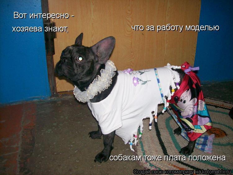 Котоматрица: Вот интересно - хозяева знают,  что за работу моделью собакам тоже плата положена