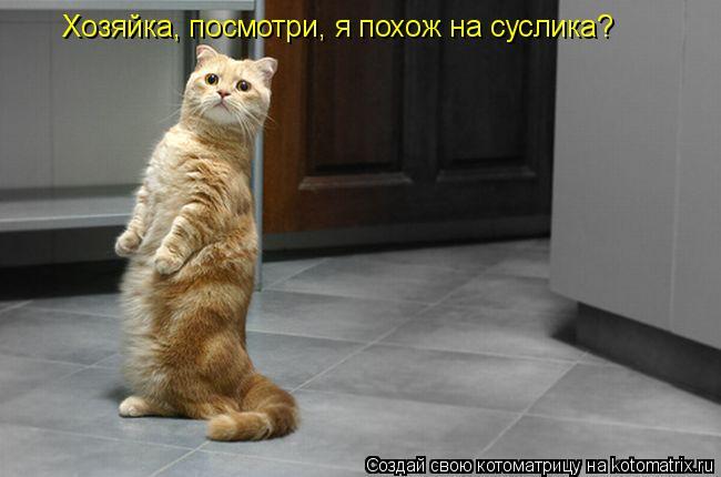Котоматрица: Хозяйка, посмотри, я похож на суслика?