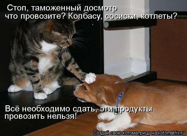 Котоматрица: Стоп, таможенный досмотр что провозите? Колбасу, сосиски, котлеты? Всё необходимо сдать, эти продукты  провозить нельзя!