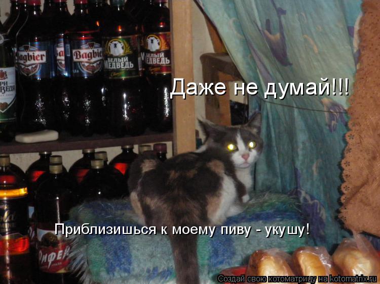 Котоматрица: Даже не думай!!! Приблизишься к моему пиву - укушу!