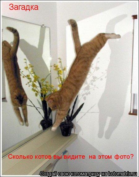 Котоматрица: Загадка Сколько котов вы видите  на этом фото?