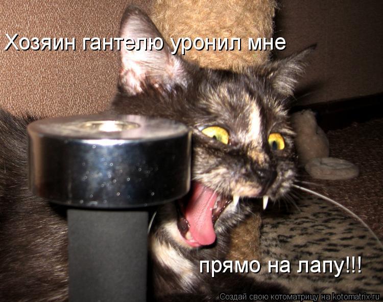 Котоматрица: Хозяин гантелю уронил мне прямо на лапу!!!