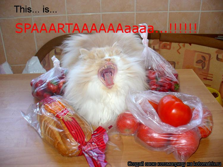 Котоматрица: This... is... SPAAARTAAAAAAaaaa...!!!!!!