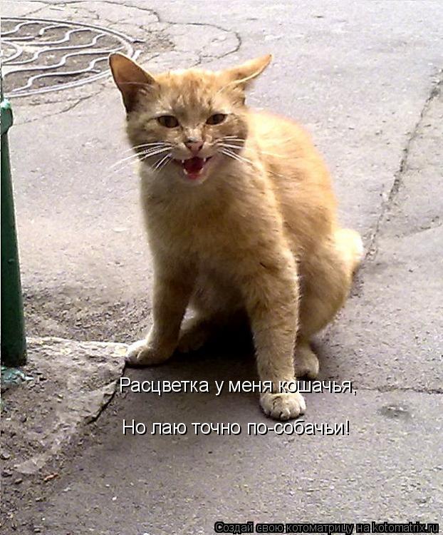 Котоматрица: Расцветка у меня кошачья, Но лаю точно по-собачьи!